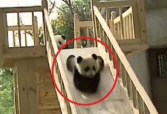 pandy1