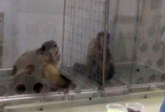 обезьна1